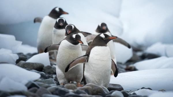 Bli med oss til Buenos Aires og Antarktis