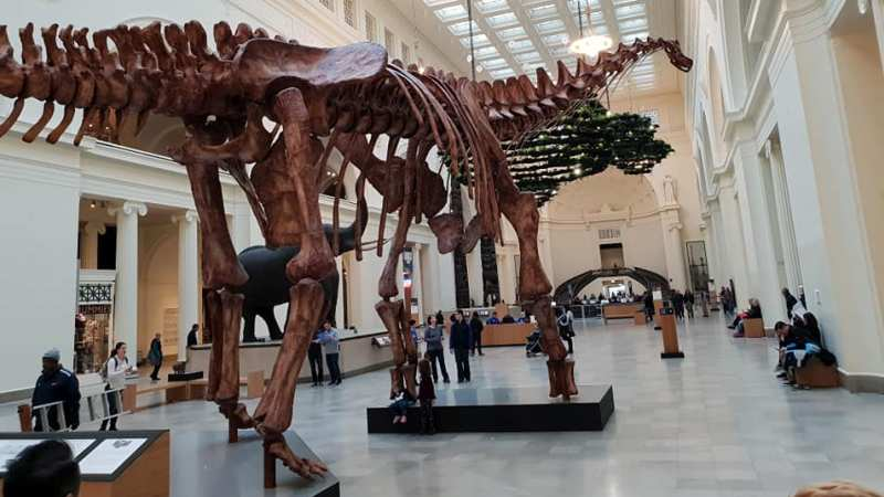 dinosaur-the-field-museum-chicago