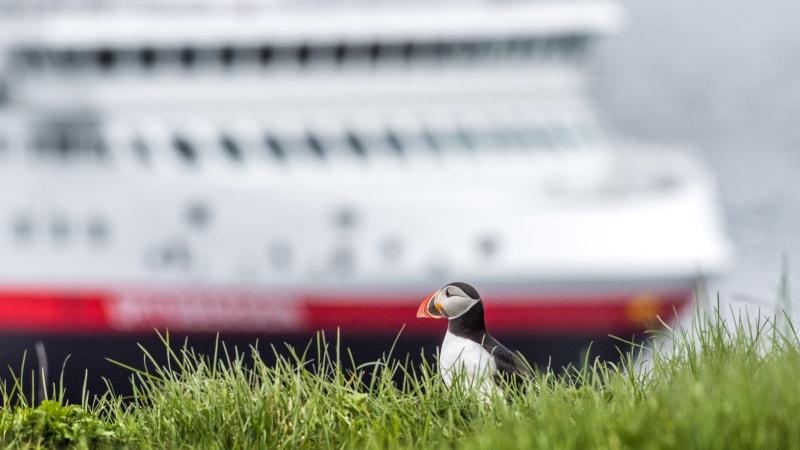hurtigruten-island-cruise