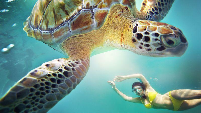 cruise-karibien-snorkling