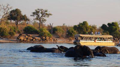 safari-elefanter-elv-bat