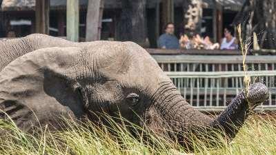 safari-botswana-elefant-camp