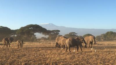 Reise til Afrika etter Covid