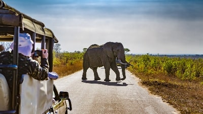 jeep-foto-elefant-safari-afrika