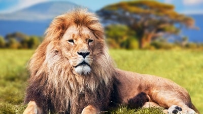 love-afrika-safari