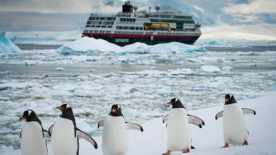 cruise-antarktis-pingviner-hurtigruten