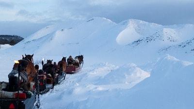 hest-slede-fjell-vinter-roros