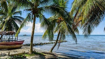 strand-palmer-karibien-cruise-ponant