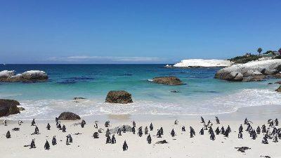 pingviner-strand-sor-afrika
